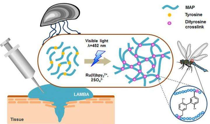 New mussel-inspired surgical protein glue: Close wounds, open medical possibilities