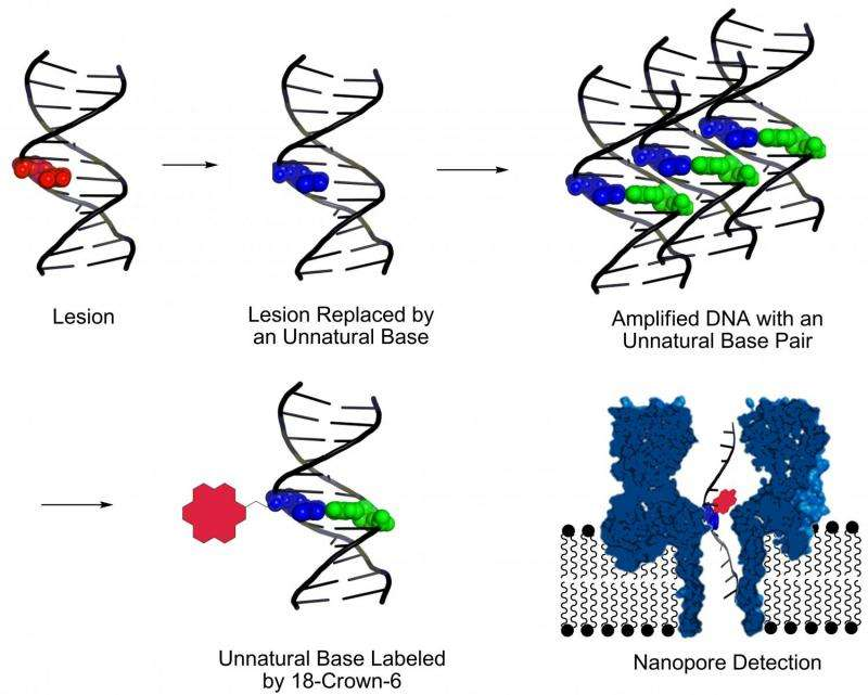New way to find DNA damage