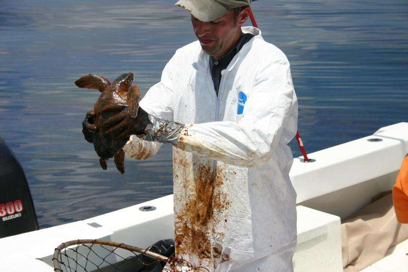 NOAA announces new Deepwater Horizon oil spill searchable database web tool