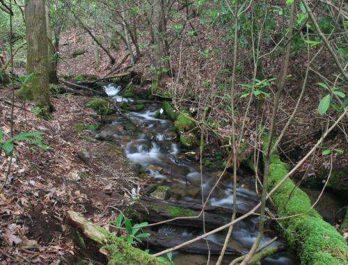 Nutrient pollution damages streams in ways previously unknown, ecologists find