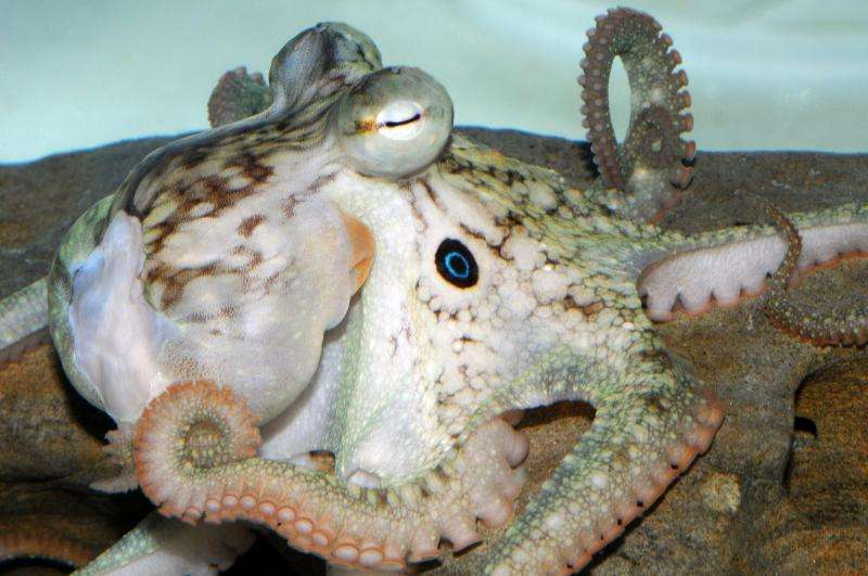 Octopus genome reveals cephalopod secrets
