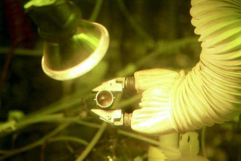 ORNL achieves milestone with plutonium-238 sample