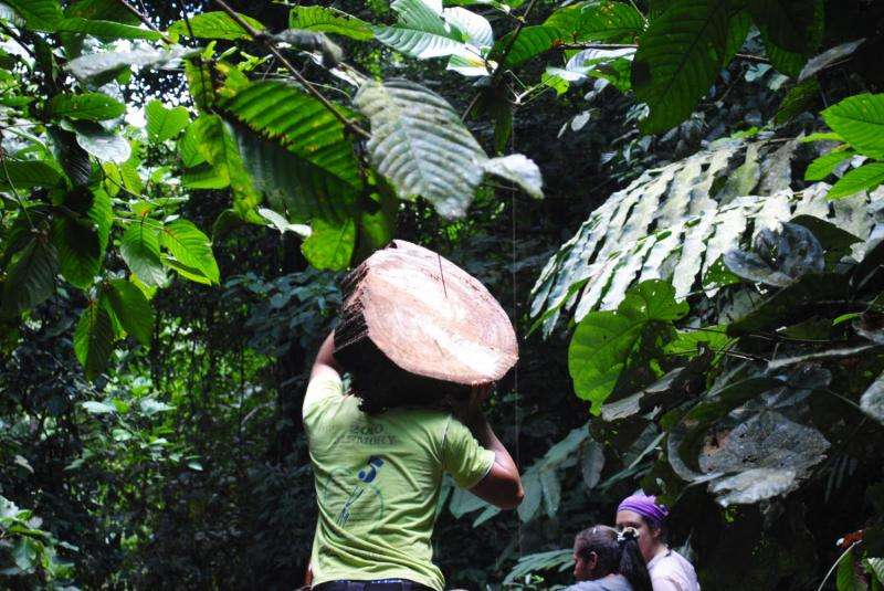 Partially logged rainforests could be emitting more carbon than previously thought