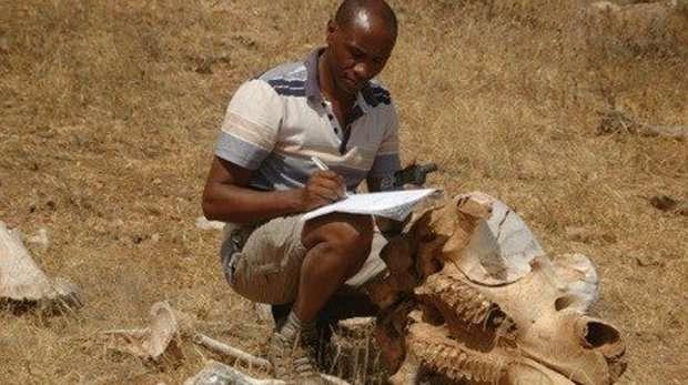 Reduce elephant poaching through communal land ownership