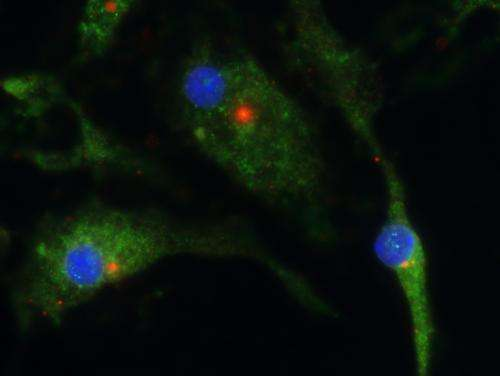 Scientists uncover marvel molecule that could lead to treatments for inflammatory diseases