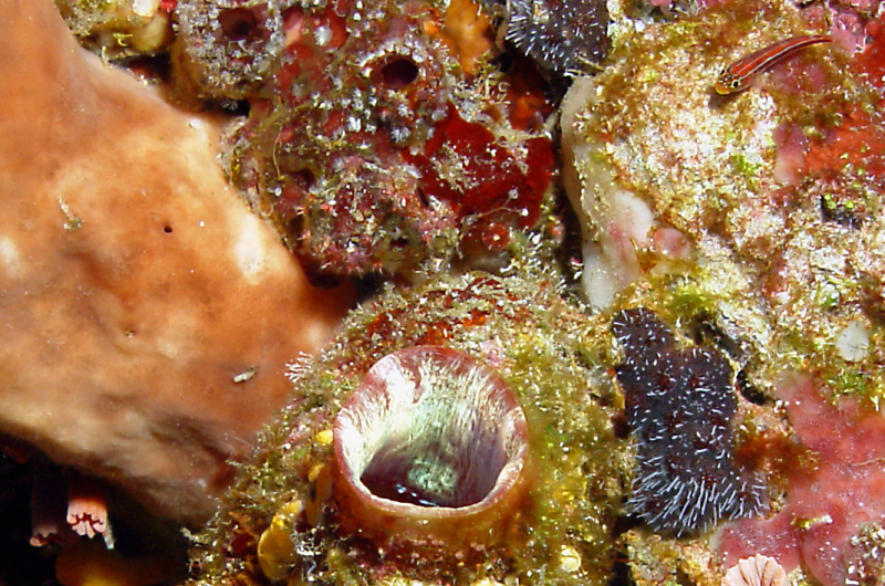 Sir Elton John is the inspiration behind the name of a new coral reef crustacean species