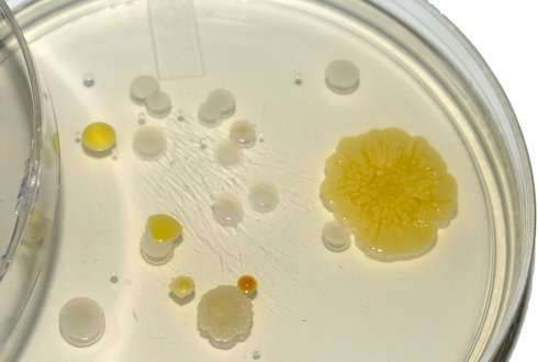 Soil provides new microbial sources for natural products