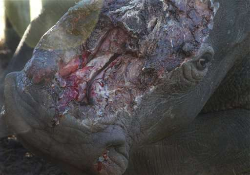 South African medics make big effort to save Hope the rhino