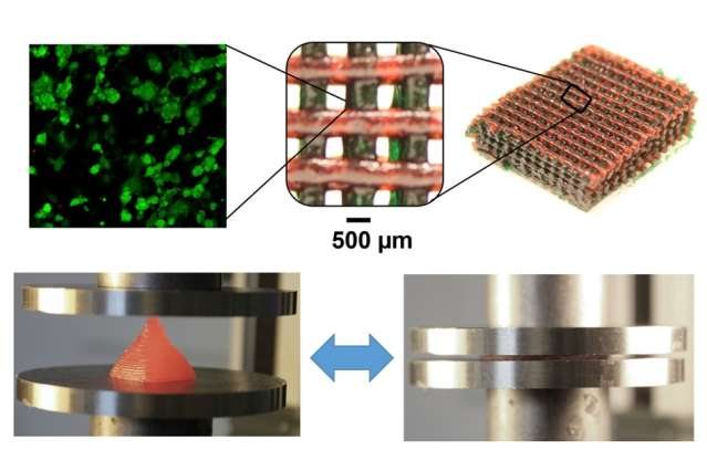 Stretchable, biocompatible hydrogels with complex patterning for tissue engineering