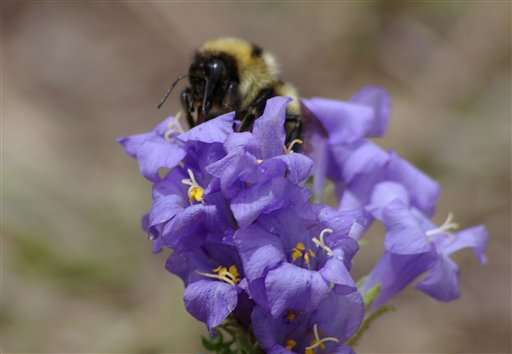 Study: Global warming, evolution are clipping bees' tongues