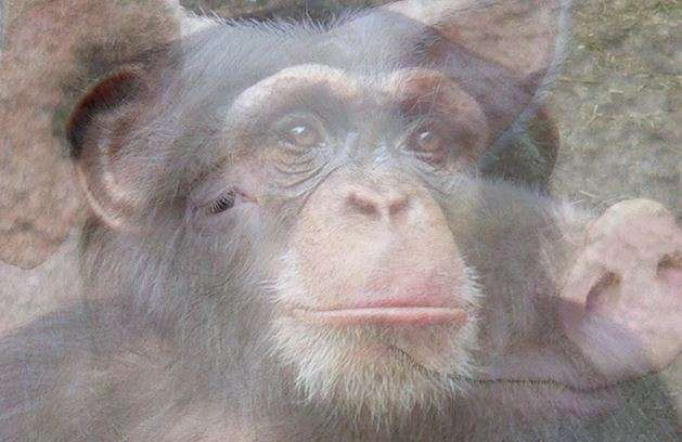 The hidden evolutionary relationship between pigs and primates revealed by genome-wide study of transposable elements