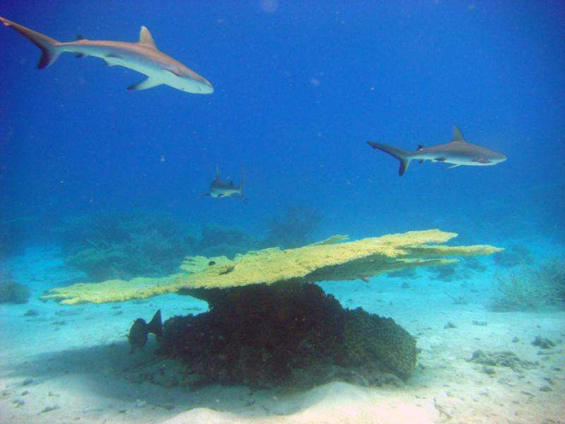 The Micronesia Challenge: Sustainable coral reefs and fisheries