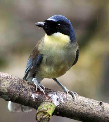 Top ten bird species surviving thanks to zoos