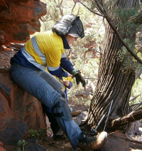 Tree rings denote century-old weather patterns