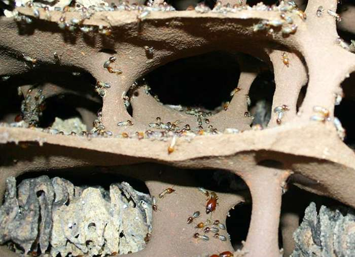 What agriculture can learn from termites and fungi