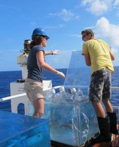 What are those phytoplankton up to? Genetics holds some clues