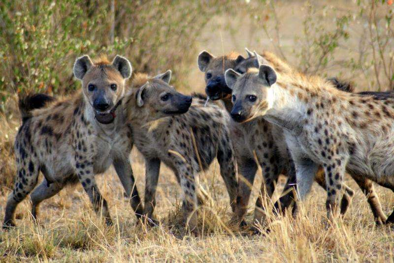 What makes a leader? Clues from the animal kingdom