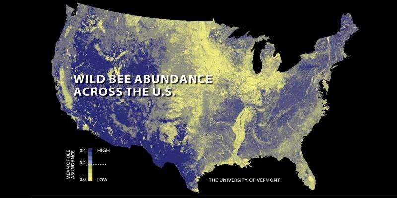 Wild bee decline threatens US crop production
