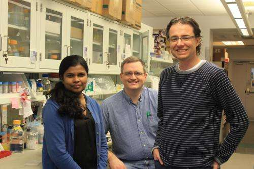 Researchers solve metabolic mystery lending insight into Lafora disease