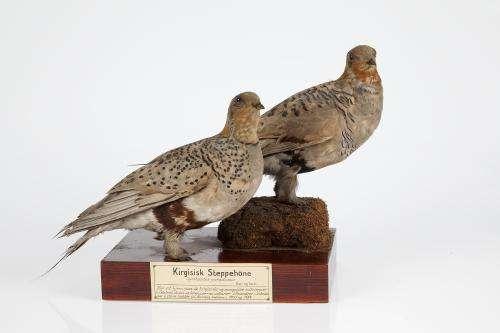 100,000 bird samples online