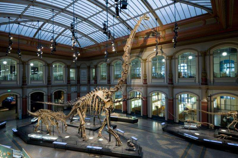New research reveals extinction is key to terrestrial vertebrate diversity