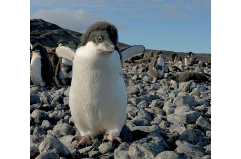 Scientists propose polar protection plan