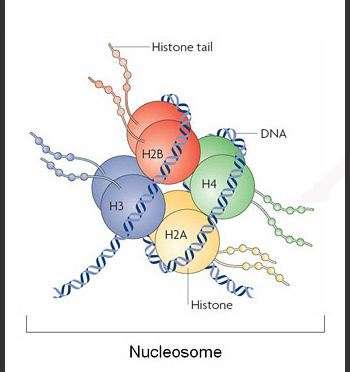 Understanding the molecular origin of epigenetic markers