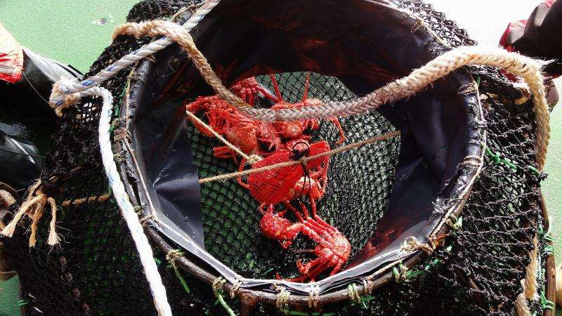 Antarctic research and king crabs connect the climate change dots