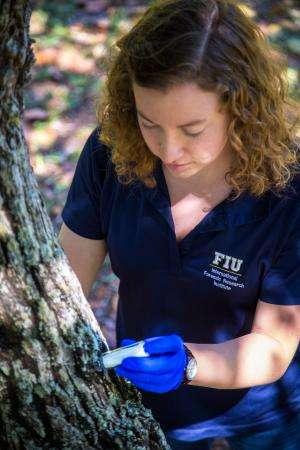 Canines, drones battle deadly avocado fungus