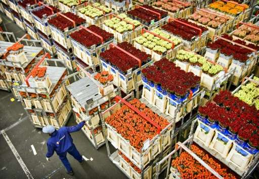 Employees of the flower auction in Aalsmeer, the Netherlands work on February 9, 2010