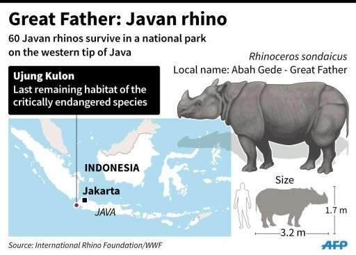 Graphic on the Javan rhino