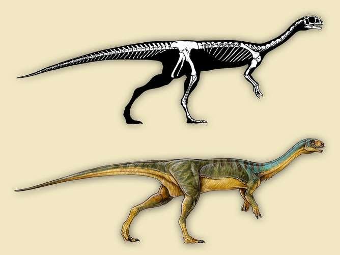 How we identified weird and wonderful 'Jurassic platypus' dinosaur