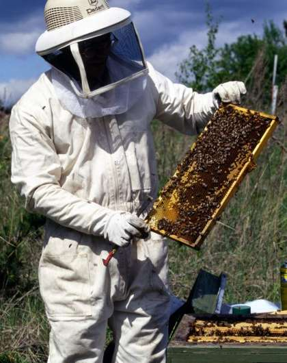 Neonicotinoid seed treatment has no immediate impact on bees in Finland