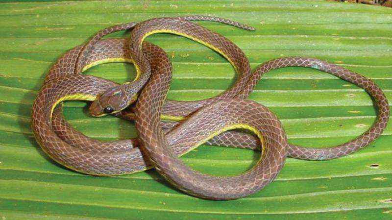 New snake species with pitch black eyes from the Andes highlights hidden diversity