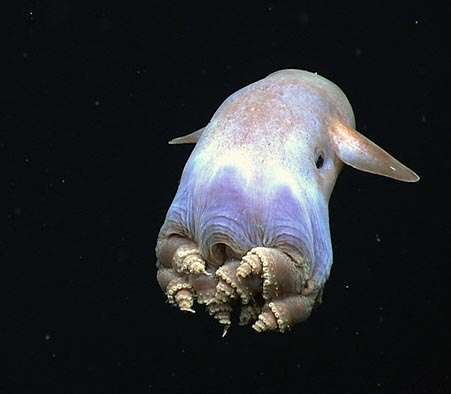 NOAA to explore depths of Caribbean Sea