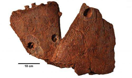 Prehistoric super salamander was top predator, fossils suggest