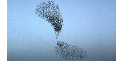 Researchers use wave theories to explain bird flock size properties
