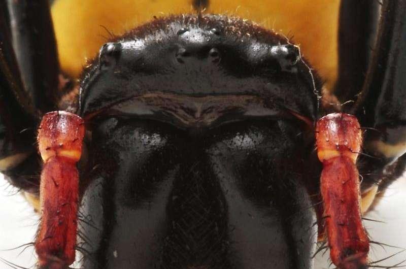 Spider and centipede venom evolved from insulin-like hormone
