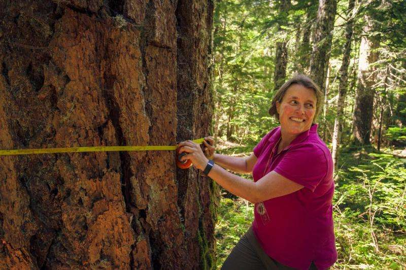 Trees either hunker down or press on in a drying and warming western US climate