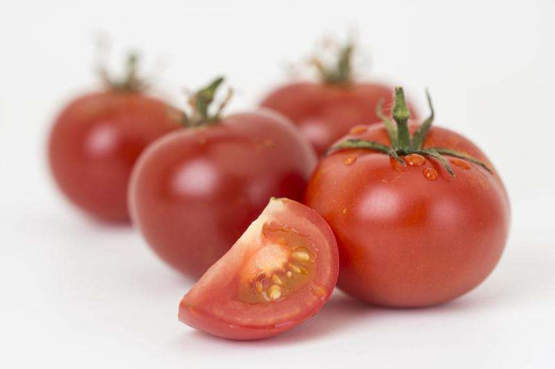 Scientists produce beneficial natural compounds in tomato -- industrial scale-up potential