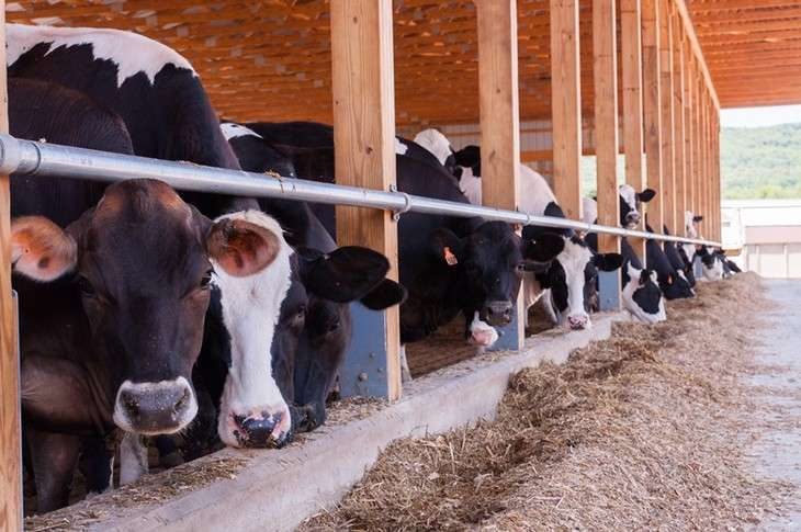 Research finds 'buying local' not all positive for dairy supply chain