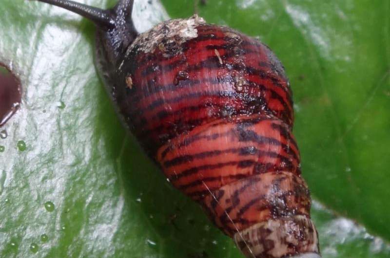 Research shows catastrophic invertebrate extinction in Hawai'i and globally