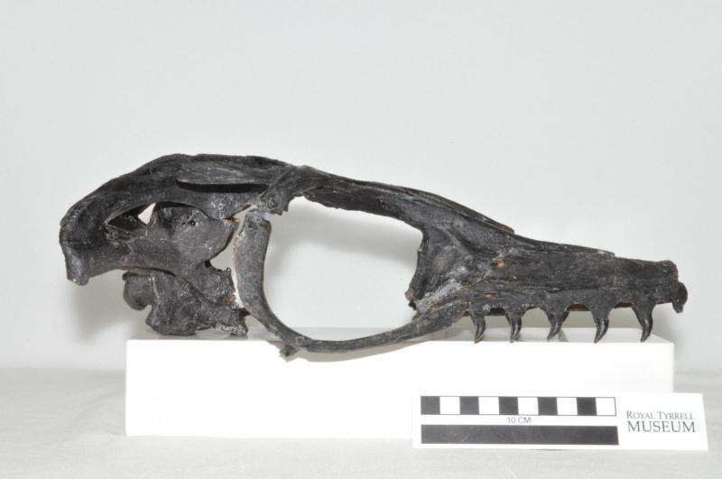 International research partnership yields discovery of a new fossil species