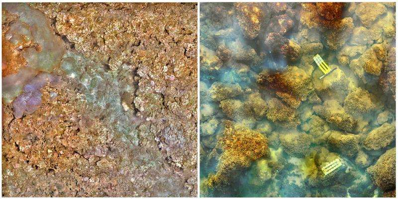 Carbon dioxide-spewing volcano drives reef from coral to algae