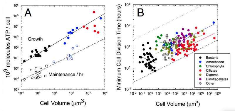 IU biologists report method to calculate lifetime energy requirements of cells, genes
