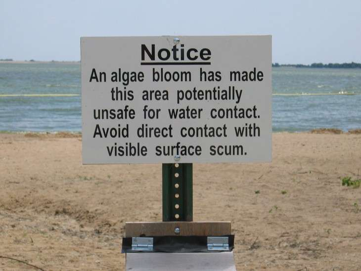 Project to reduce risk of harmful algal blooms in ponds and lakes