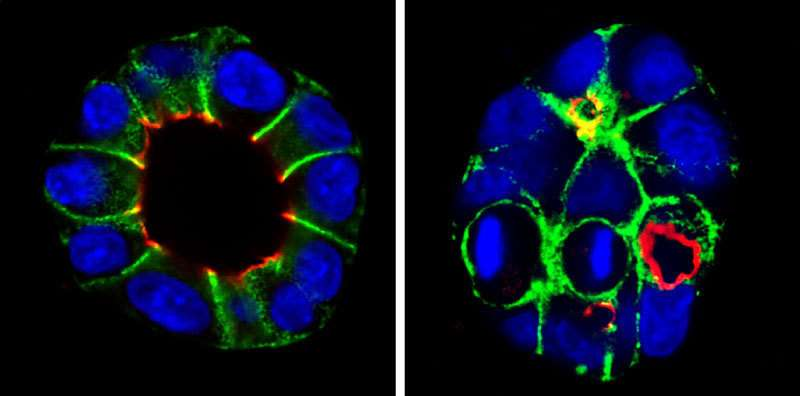 Researchers identify molecules that help cells to pinpoint their position