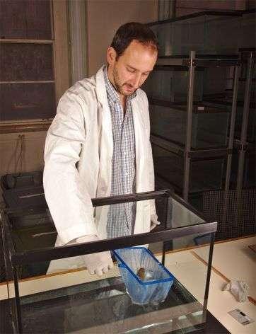 Scientists detail progressive organization of immune efficiency in lungfish
