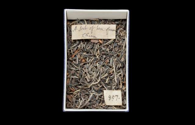 Researchers uncover the oldest tea in Britain