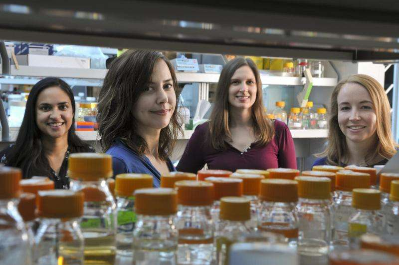 Stanford researchers genetically engineer yeast to produce opioids